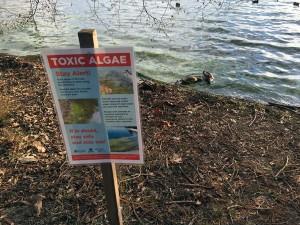 algae-alert