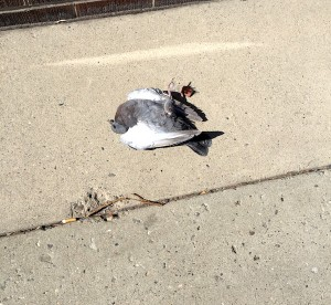 Dead-Bird-1